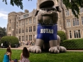 Hoyas Bulldog